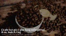 cung-cap-ca-phe-nguyen-chat-tai-di-an-binh-duong-0904684089-290320-01_16
